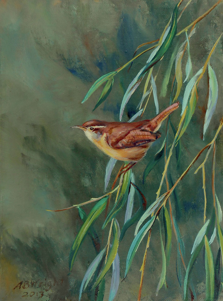 Carolina wren on a grassy branch
