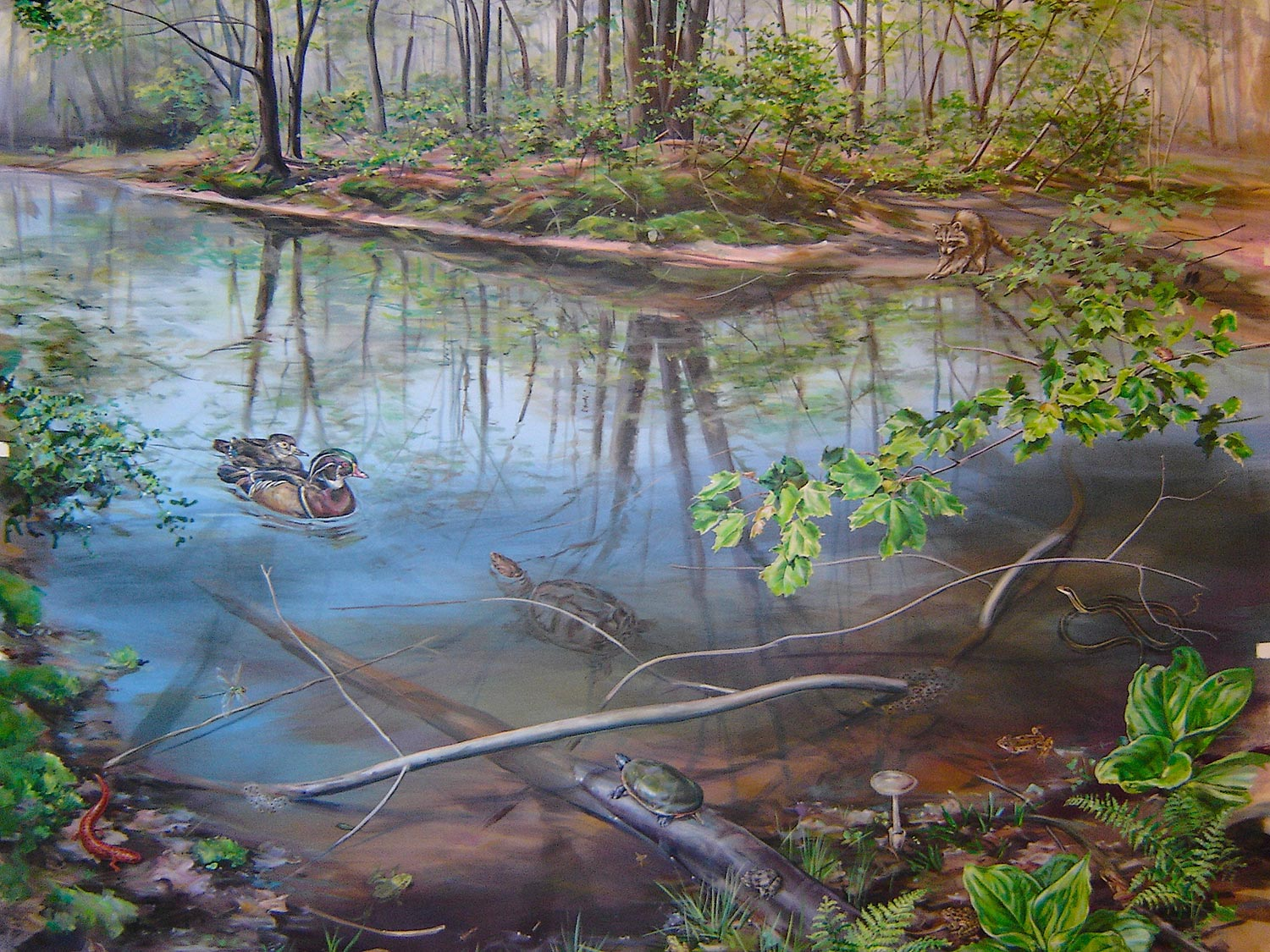 vernal pool with ducks and amphibians