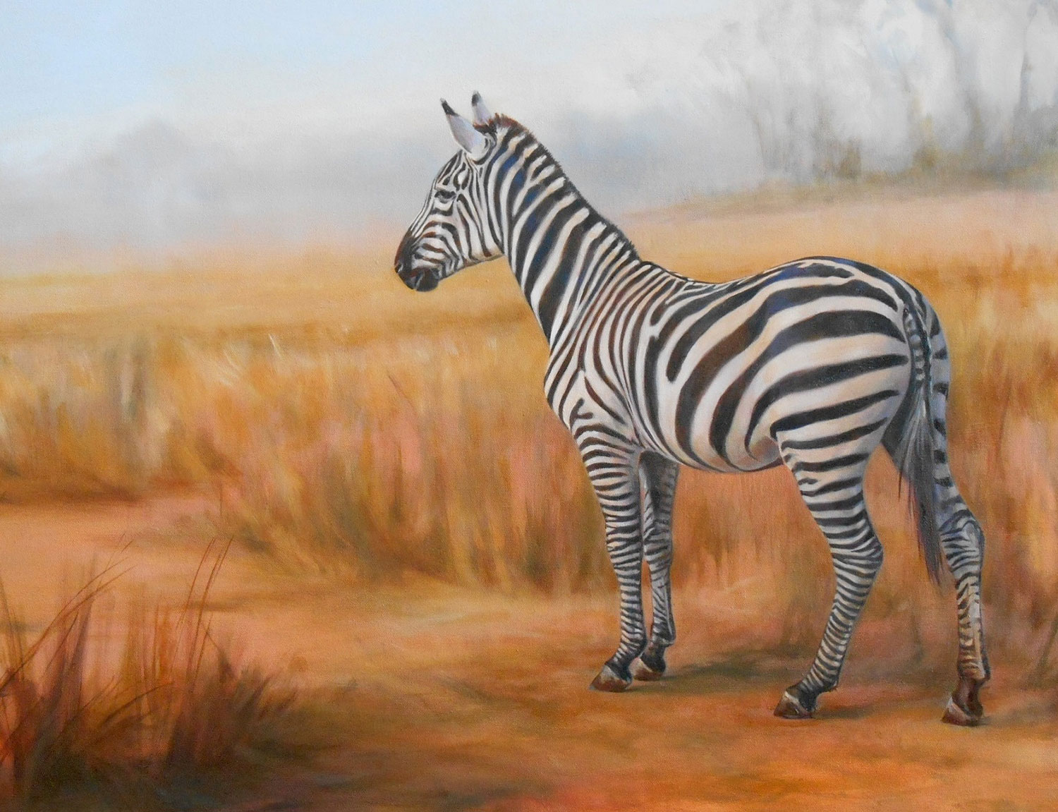 zebra on grassy plain